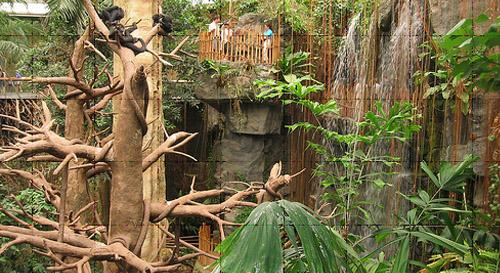 Lied Jungle
